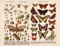 Pillangók, hártyásszárnyúak, félfedelesszárnyúak, litográfia 1886, eredeti, 32 x 41 cm, nagy méret