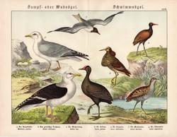 Vízityúk, haris, jasszána, sirály, cankó, litográfia 1886, eredeti, 32 x 41 cm, nagy méret, madár