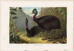 Sisakos kazuár, litográfia 1883, színes nyomat, eredeti, Brehm, Thierleben, állat, madár, taréjos
