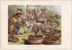 Pápaszemes kobra, litográfia 1883, színes nyomat, eredeti, Brehm, Thierleben, állat, kigyó, Ázsia