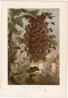 Rajzás, litográfia 1884, színes nyomat, eredeti, Brehm, Thierleben, állat, méh, család, méhraj