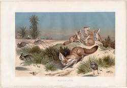 Sivatagi róka, litográfia 1883, színes nyomat, eredeti, Brehm, Thierleben, állat, ragadozó, Afrika