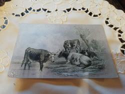 Gyűjteményből képeslap 6