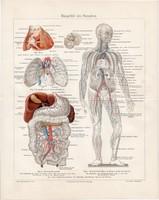 Ember érrendszere (2), színes nyomat 1903, német, litográfia, eredeti, gyógyászat, ér, anatómia