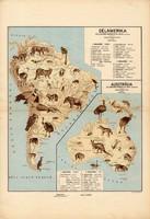 Dél - Amerika és Ausztrália állatföldrajzi térkép 1928, magyar nyelvű, 28 x 41 cm, állat, hal, madár