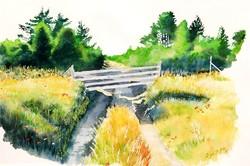 Ligeti Miklós: Erdélyi öreg fahíd (Siklód, 2005) - nagyméretű akvarell