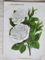 Antik nyomat, biedermeier virágábrázolás, A kert című újság műmelléklete - 2