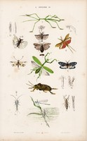 Bogár, szitakötő, csótány és gyapjúbogár, góliátbogár, litográfia 1885, eredeti, 26 x 42 cm, állat