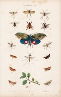 Légy, pillangó, bogár és lepke, bogár, achias, litográfia 1885, eredeti, 26 x 42 cm, nagy méret