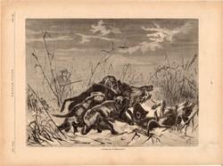 Vadkan - vadászat, fametszet 1881, metszet, nyomat, 20 x 30 cm, Ország - Világ, újság, vaddisznó