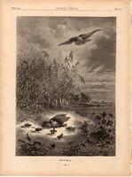 Jön a héja, fametszet 1881, metszet, nyomat, 22 x 31 cm, Ország - Világ, újság, madár, vadászat