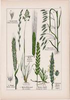 Árpa, rozs, tarackbúza és selyemperje, csomós ebír, rezgőfű, litográfia 1895, 17 x 25 cm, növény
