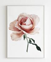 Pink rózsa, akvarell 28x36cm