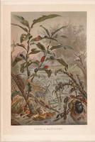 Bogarak, litográfia 1894, színes nyomat, eredeti, német, Brehm, állat, bogár, árvízi, víz, katica