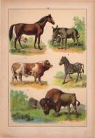 Állatok (14), litográfia 1902, eredeti, kis méret, magyar, állat, ló, szarvasmarha, zebra, szamár