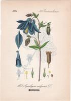 Közönséges harangláb, litográfia 1882, eredeti, kis méret, színes nyomat, növény, virág, Aquilegia