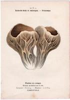Bordás serleggomba és fehér galóca, litográfia 1895, eredeti, kis méret, színes nyomat, gomba