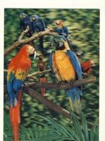 Papagájok 3 D retro háromdimenziós képeslap