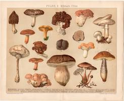 Gombák I., litográfia 1895, színes nyomat, német, Brockhaus, gomba, csiperke, vargánya, szarvasgomba