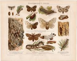 Erdei kártevők (lepke) II. (2), litográfia 1898, német nyelvű, eredeti színes nyomat, pillangó, báb