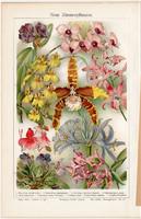 Új szobanövények., színes nyomat 1910, német nyelvű, eredeti, litográfia, növény, virág, régi