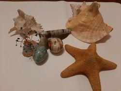 Ásványok, fosszilia, kagyló, szerencsefa egyben