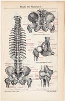 Ínszalag I., II., színes nyomat 1903, német nyelvű, eredeti, litográfia, gyógyászat, orvos, ember