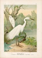 Nagy kócsag (2), litográfia 1897, eredeti, 29 x 39 cm, nagy méret, madár, színes nyomat, Herodias