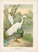 Nagy kócsag (9), litográfia 1897, eredeti, 29 x 39 cm, nagy méret, madár, színes nyomat, Herodias