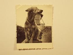 Régi fotó fénykép - Kutya, kutyus, állat,, TSZ mezőgazdaság, termelőszövetkezet - 1950-es évek
