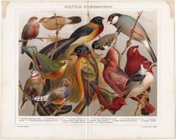 Külföldi szobamadarak (15), 1896, litográfia, színes nyomat, eredeti, magyar, madár, pinty, régi