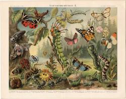 Lepke, bogár, hernyó (4), litográfia 1898, színes nyomat, német nyelvű, eredeti, pillangó, védelem