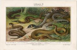 Kígyók, színes nyomat 1905, német nyelvű, litográfia, vípera, vízisikló, kígyó, régi, állat