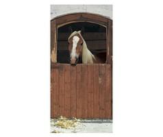 ÚJ!! Horse in Box, ló pajta karám fotótapéta ajtóra/falra 97x220 cm