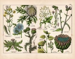 Szamárbogáncs, articsóka, szártalan bábakalács, litográfia 1887, eredeti, növény, virág, nyomat