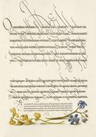 Antik grafika sárga pukkanó dudafürt kék csillagvirág rajz botanikai illusztráció reprint nyomat
