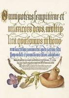 Mira Calligraphiae Monumenta kézirat arany kalligráfia reprint gomba százlábú féreg gólyaorr rajz