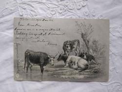 Antik/szecessziós ezüst felületű képeslap/üdvözlőlap tájkép, tehén/tehenek 1901