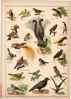 Madár, fecske, rigó, holló, veréb, pinty, litográfia 1899, eredeti, 24 x 34 cm, nagy méret, állat