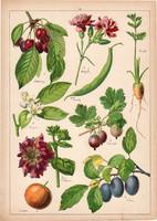 Szilva, cseresznye, szegfű, litográfia 1899, eredeti, 24x34 cm, nagy méret, növény, gyümölcs, virág