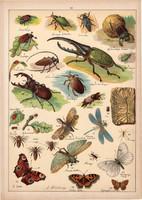 Méh, szitakötő, pillangó, lepke, bogár, litográfia 1899, eredeti, 24 x 34 cm, nagy méret, állat