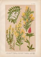 Magyar növények (45), litográfia 1903, színes nyomat, virág, ákácz, reketty, lóhere, sül - zanót
