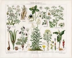 Mérgező növények I., litográfia 1894, német nyelvű, eredeti, színes nyomat, növény, virág, méreg