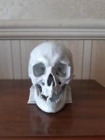 Herendi nagy fehér koponya