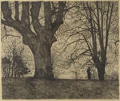 1E914 Scultéty Erzsébet : Ártéri erdőben