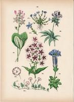 Tavaszi tárnics, vidrafű, kék csatavirág, lángvirág, apró szulák litográfia 1884, növény, virág