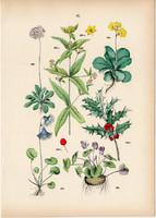 Magyal, lisztes kankalin, havasi harangrojt, erdei ciklámen, lizinka litográfia 1884, növény, virág
