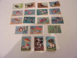 Ismeretterjesztő kártyák halakról bogarakról és gombákról