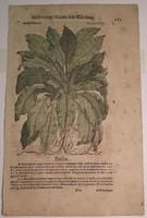 Színes metszet, botanikai téma, 17. század