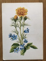Szép virágos képeslap - Szekeres István rajz